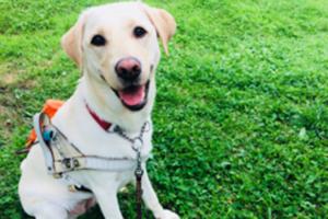 ~盲導犬ユーザーに笑顔を!~~クラウドファンディング終了~